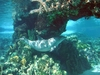 Dolphin_at_seaworld