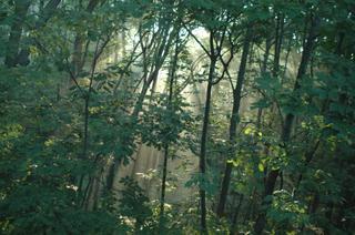 Light_through_trees_2_compressed_1