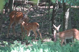 Mama_and_two_babies_email_2